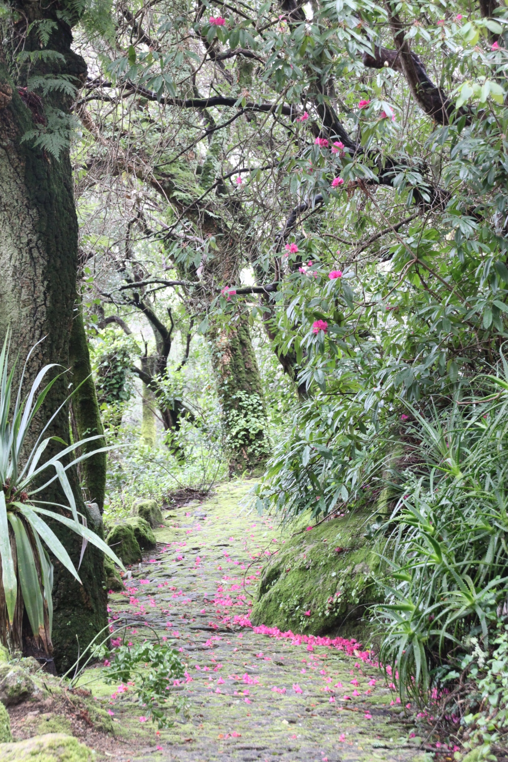 Monserrate path