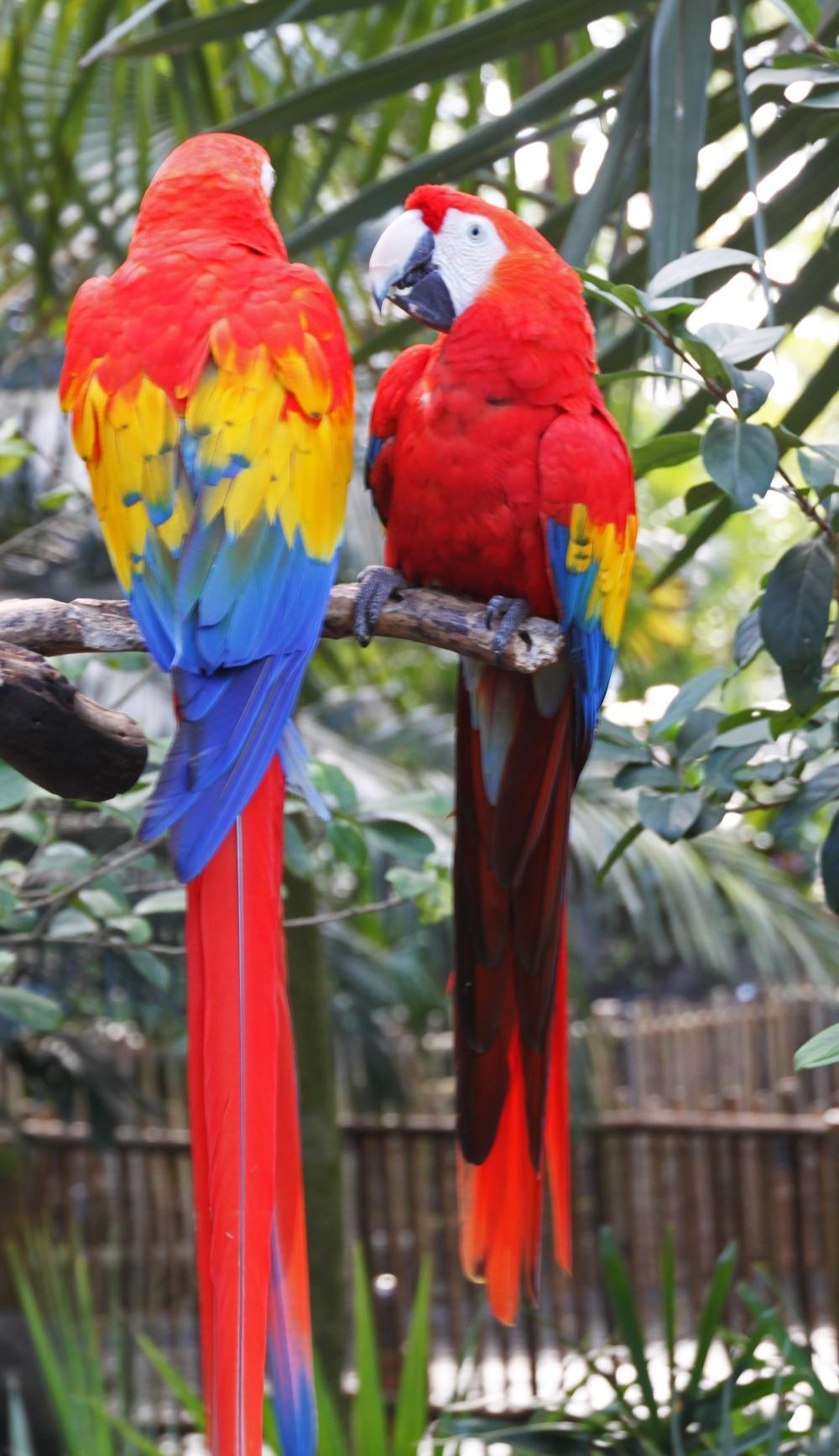 parrots WDW 2013