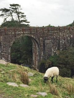 18 bike path sheep and bridge